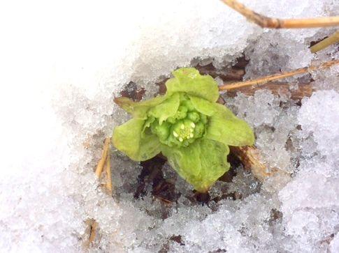 温泉街で「小さな」春を見つけた
