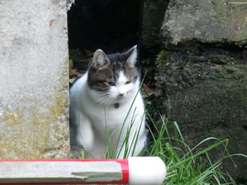 下風呂温泉の猫ちゃん!