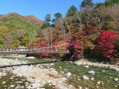 塩原温泉 『紅の吊橋』紅葉情報