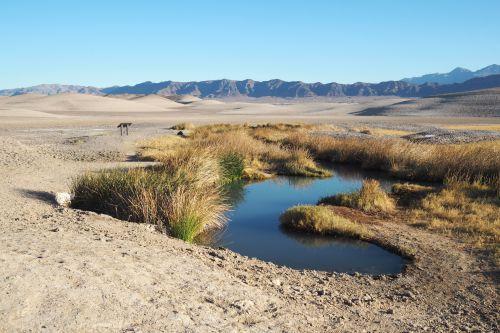 テコパ泥温泉, カリフォルニア州